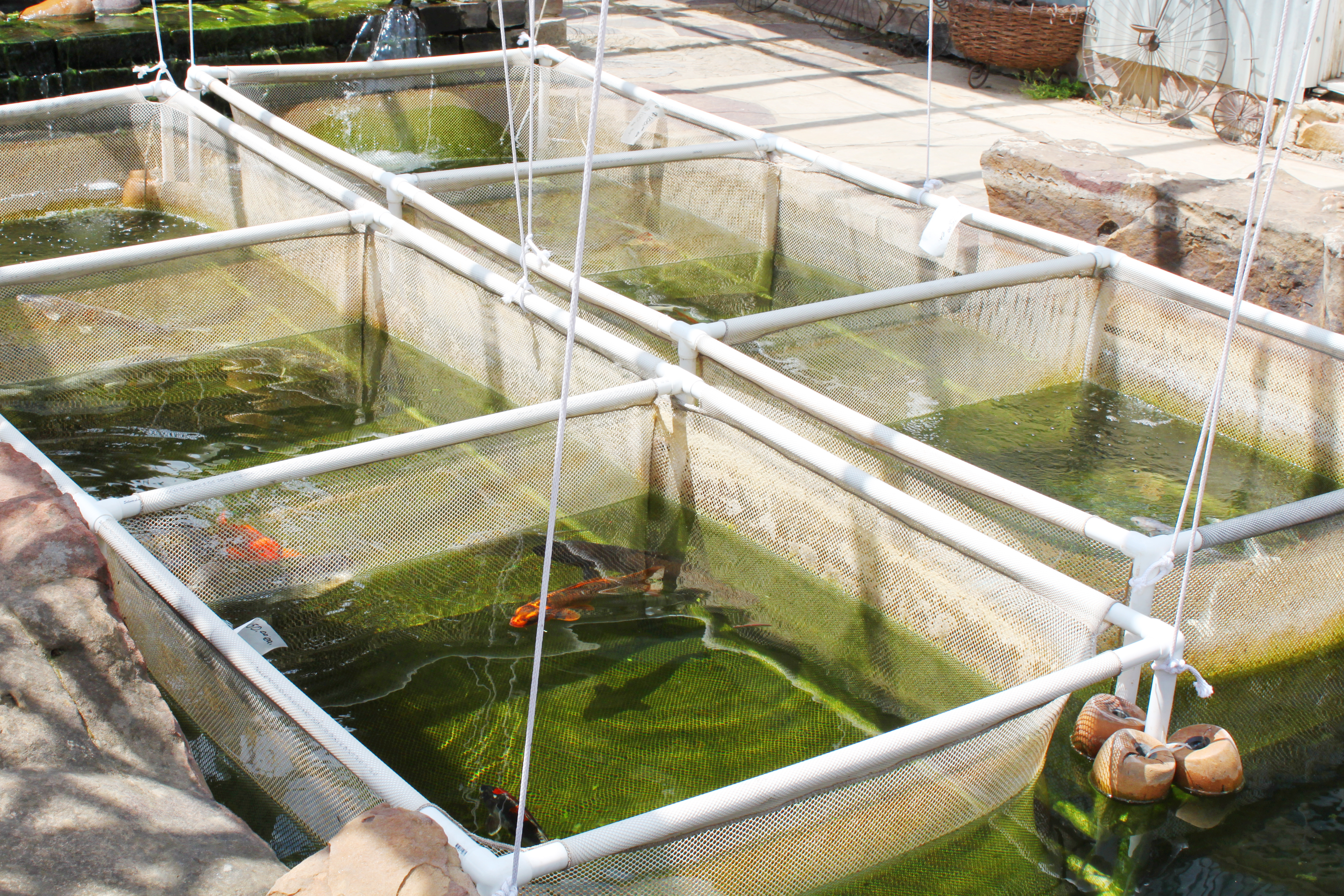 Hodowla ryb w obiegach zamkniętych